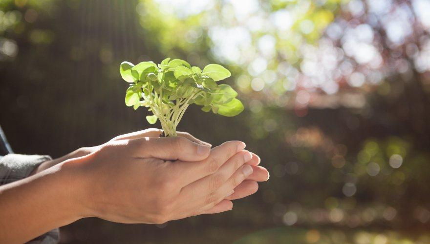 Impactos ambientales de nuestro estilo de alimentación