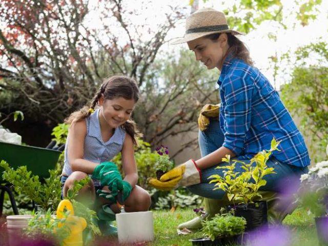 Huertas caseras: ¿qué necesitas para poder hacer la tuya?